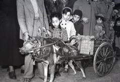 Un perro tira de un trineo ante la mirada de los niños mientras es llevado a la bendición de San Antón fotografiado por Campúa en 1953