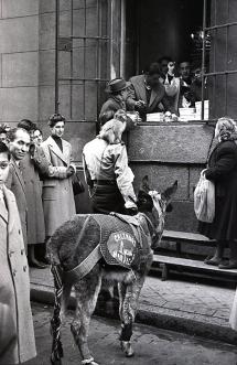 Un burro y un mono son llevados a bendecir ante San Antón, fotografiado por Campúa en 1954