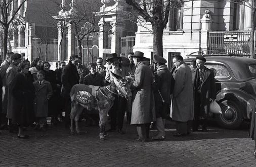 Un burro es llevado a bendecir ante San Antón, fotografiado por Campúa en 1954