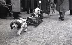 Un perro tira de un carrito con un niño durante el desfile de San Antón fotografiado por Campúa en 1955