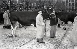 Ganaderos con una vaca lechera en el desfile de San Antón fotografiados por Campúa en 1955