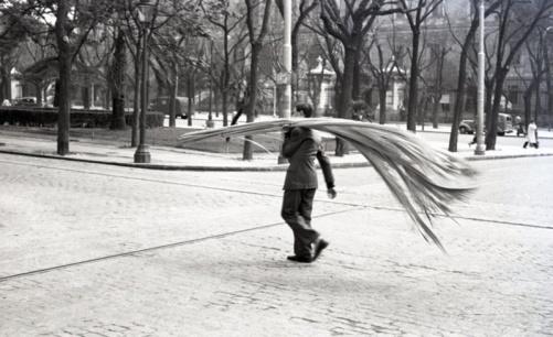 Un joven carga palmas por el Paseo de Recoletos el 11 de abril de 1954. Foto. Campúa